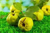 сладкий айва с листьями, на траве, на зеленом фоне — Стоковое фото