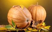 два спелые тыквы оранжевый с желтым осенью листья на желтом фоне — Стоковое фото