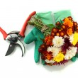 Secateurs with flowers isolated on white - Stock Photo