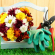 Secateurs with flowers in box on fence background - Stock Photo