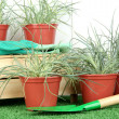 Pots with seedling on green grass on wooden background - Stock Photo