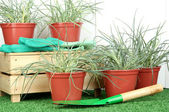 Vasos com mudas na grama verde sobre fundo de madeira — Foto Stock