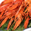 Tasty boiled crayfishes with fennel on plate close-up — Stock Photo