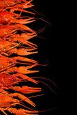 Tasty boiled crayfishes isolated on black — Stock Photo