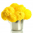 Bright yellow chrysanthemums in metal bucket, isolated on white - Stock Photo