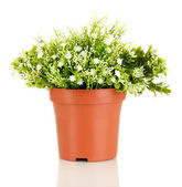Decorative flowers in flowerpot isolated on white — Stock Photo
