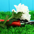 Secateurs with flower on grass on fence background - Foto Stock