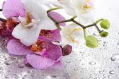 Pembe ve beyaz güzel orkideler ile düşer — Stok fotoğraf