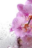 розовый красивых орхидей с каплями — Стоковое фото