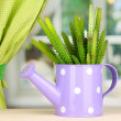 Cactus in watering con windowsill — Stock Photo #17683271