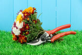 Secateurs with flowers on wooden background — Foto de Stock