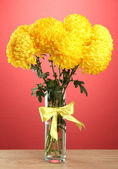 Bright yellow chrysanthemums in glass vase, on red background — Stock Photo