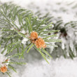 Spruce covered with snow — Stock Photo #17847135