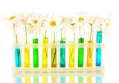 Blumen in reagenzgläsern auf blauem hintergrund isoliert — Stockfoto