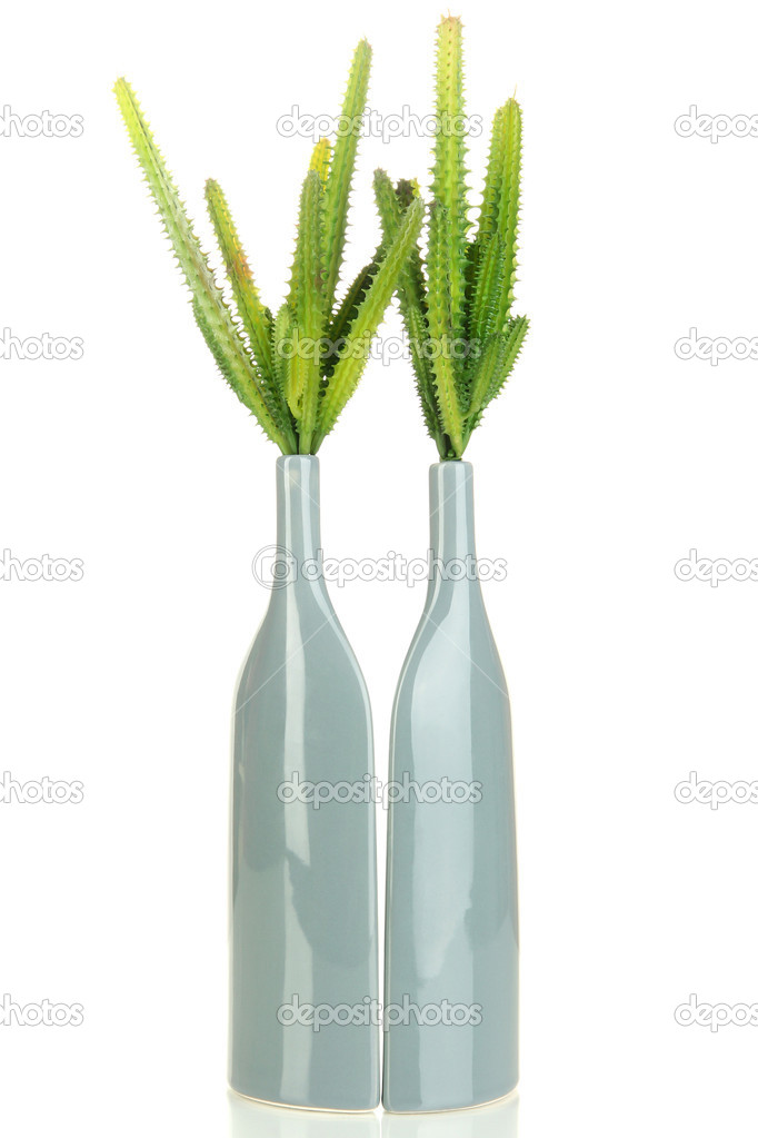 Cactuses in vase isolated on white — Stock Photo #17992015