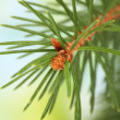 Fir tree branch, on green background — Stock Photo #18037789
