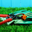 Secateurs with flower on grass on fence background - Stockfoto