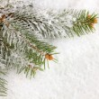 Spruce covered with snow — Stock Photo #18051867