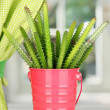 Cactus in pot on windowsill — Stock Photo #18065183