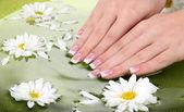 Mãos de mulher com francês manicure e flores em verde tigela com água — Foto Stock