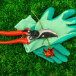 Secateurs with flower on green grass background - Stock Photo