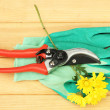 Secateurs with flower on wooden background - Stockfoto