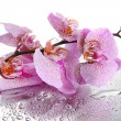 Pink beautiful orchids with drops — Stock Photo #18106489