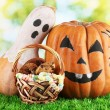 Halloween pumpkins on grass on bright background - Photo
