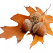 Brown acorns on autumn leaf, isolated on white — Stock Photo