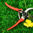 Secateurs with flower on green grass background — Stock fotografie