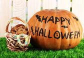 Calabaza de halloween en pasto en fondo claro — Foto de Stock