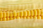 Fresh corn, close up — Stock Photo
