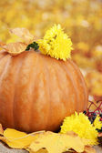 Pumpkin and autumn leaves, on yellow background — Stock Photo