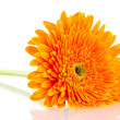 Beautiful gerbera flower isolated on white — Stock Photo
