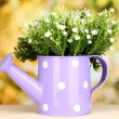 Decorative flowers in watering can on bright background — Stock Photo #18275361