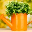 Decorative flowers in watering can on bright background — Stock Photo #18275367