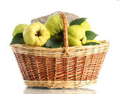 Sweet quinces with leaves in basket, isolated on white — Stock Photo