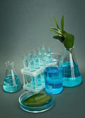 Test-tubes and leaf tested in petri dish on grey background — Stock Photo