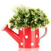 Decorative flowers in watering can isolated on white — Stock Photo