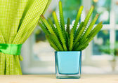 Cactus em vaso no peitoril da janela — Foto Stock