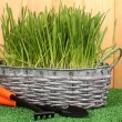 Green grass in basket near fence — Stok fotoğraf