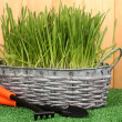 Green grass in basket near fence — Stockfoto