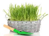 Grünes gras in korb isoliert auf weiss — Stockfoto