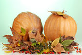 Two ripe orange pumpkins with yellow autumn leaves on green background — Stock Photo