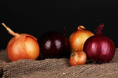 Ripe onions on sacking on wooden table on black background — Stock Photo