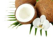 Kokosy z liści i kwiatów, na białym tle — Zdjęcie stockowe