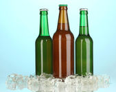 Beer bottles in ice on blue background — Stock Photo