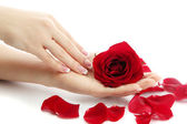 Beautiful woman hands with rose, isolated on white — Stock Photo