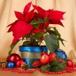 Beautiful poinsettia with christmas balls on gold fabric background — Stock Photo