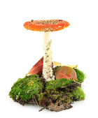 Red amanita with moss isolated on white — Stock Photo